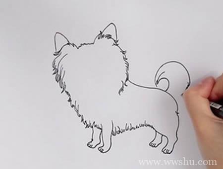 蝴蝶犬如何画 蝴蝶犬简笔画步骤图解教程