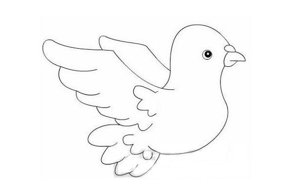和平鸽如何画简笔画简单又漂亮-和平鸽简笔画