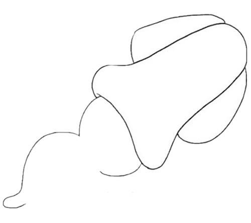 简单可爱的乌贼简笔画画法步骤图片