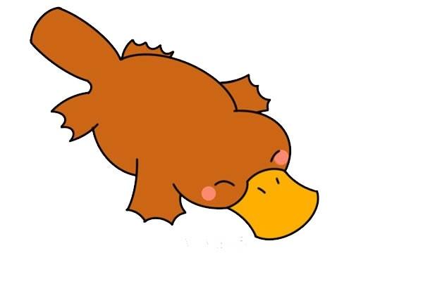 鸭嘴兽简笔画,彩色卡通鸭嘴兽简笔画画法步骤图片
