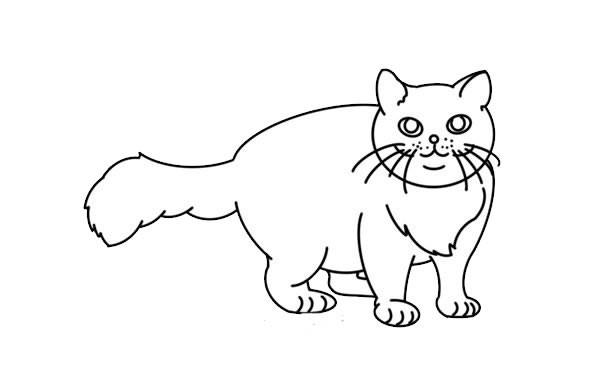 橘猫简笔画彩色画法步骤图解教程