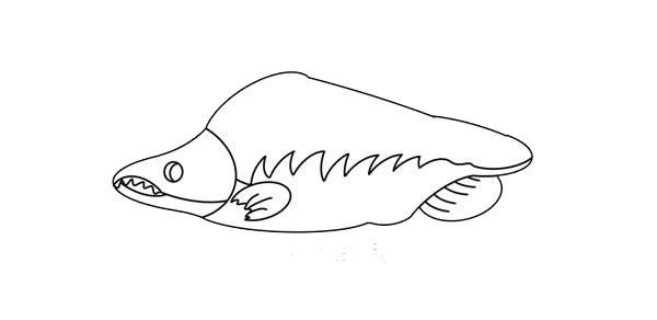大马哈鱼简笔画画法图片