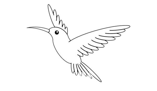 蜂鸟简笔画的画法步骤图解教程