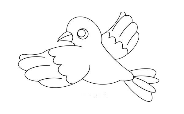 漂亮的鸽子简笔画画法步骤图片