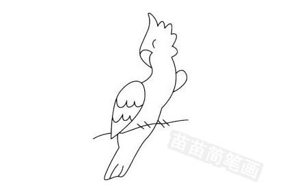 鹦鹉简笔画的简单画法步骤图片大全