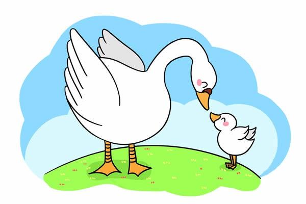 鹅妈妈和小鹅宝宝的简笔画 大白鹅简笔画图片