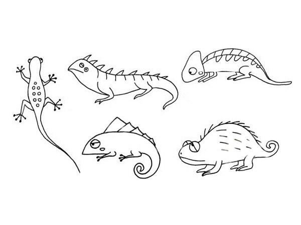 蜥蜴简笔画的简单画法图片大全