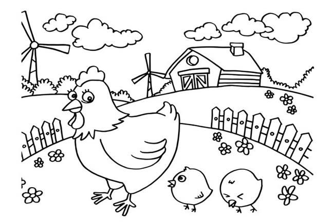 农场里的母鸡和小鸡简笔画图片