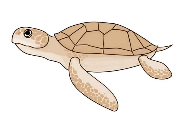 海龟简笔画 简单七步画出海龟简笔画步骤图解教程