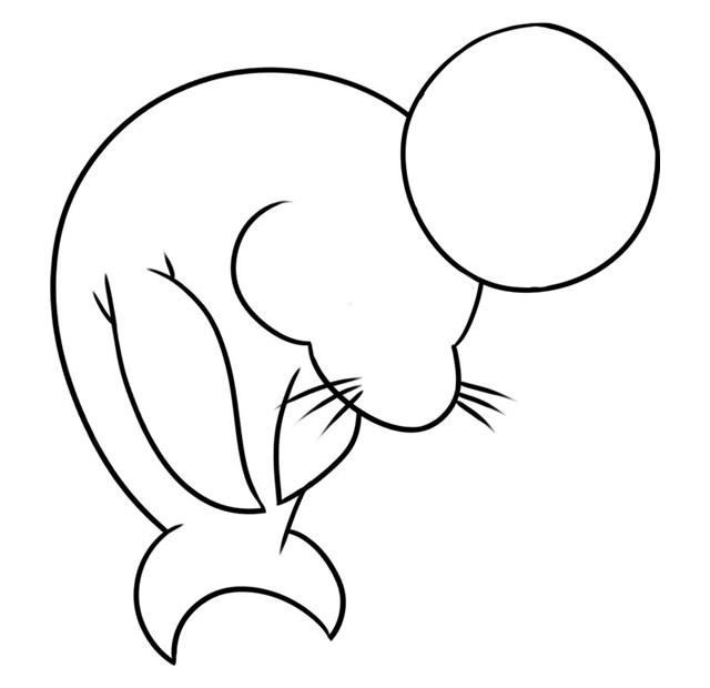 海狮简笔画 儿童学画海狮简笔画教程步骤图片大全