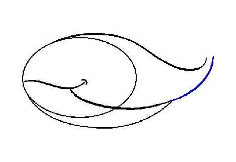 鲸鱼的画法 海洋生物鲸鱼简笔画步骤教程