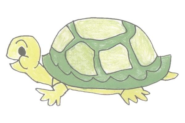 乌龟简笔画彩色画法步骤图解教程