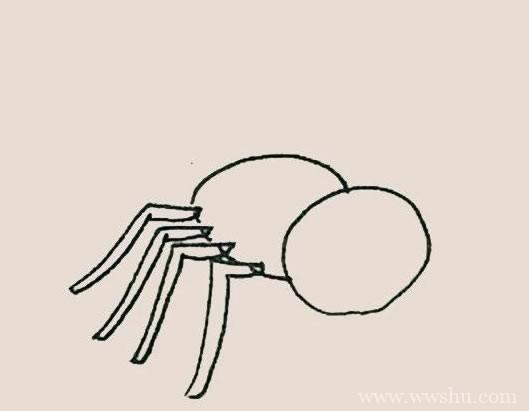 蜘蛛简笔画彩色画法步骤图解教程