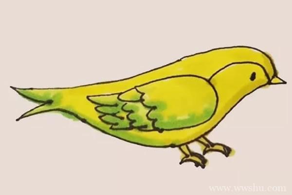 【黄鹂如何画】黄鹂简笔画彩色画法步骤图解教程