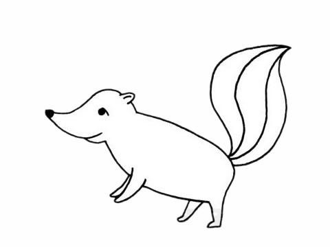 【臭鼬简笔画】臭鼬简笔画步骤图解教程及图片大全