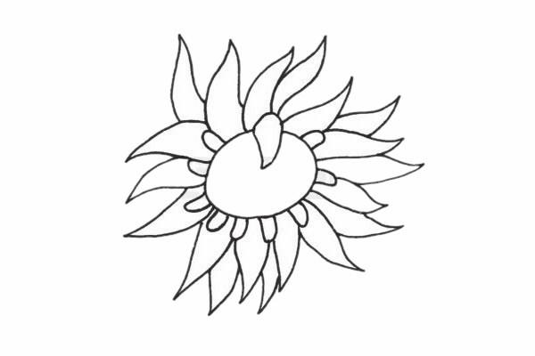 海葵简笔画/简单画法/步骤教程及图片大全
