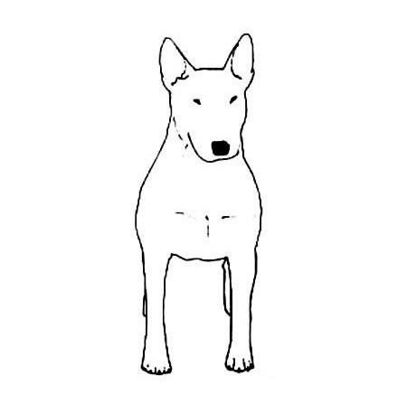 可爱的小狗简笔画图片大全_可爱的狗狗简笔画图片素材