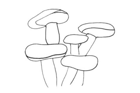 珊瑚超简单画法_珊瑚简笔画步骤图解教程及图片大全