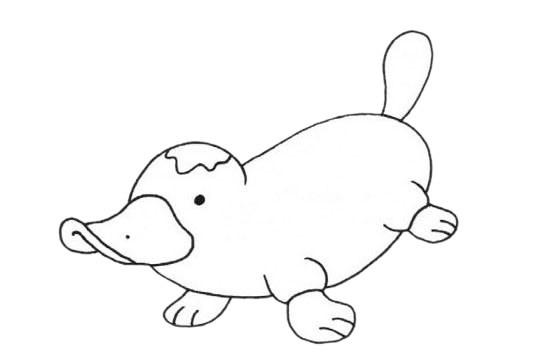 鸭嘴兽卡通简笔画_鸭嘴兽简笔画步骤图解教程