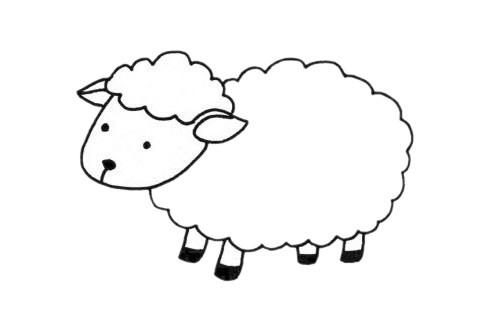 可爱的小羊简笔画步骤图解教程及图片大全