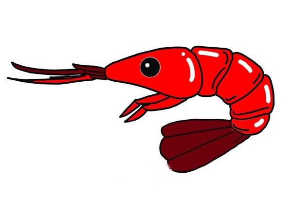 红色大虾简笔画画法步骤图解教程