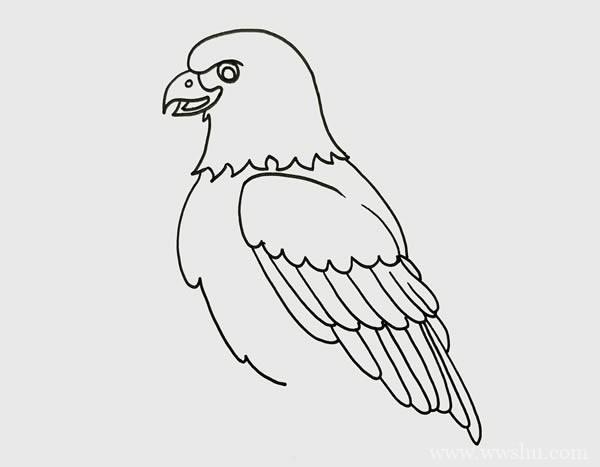 老鹰如何画霸气又简单 老鹰简笔画步骤画法图片