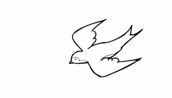 飞翔的小燕子简笔画步骤图片教程