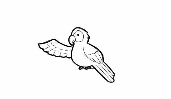 鹦鹉如何画简单又漂亮_聪明的小鹦鹉简笔画图解教学