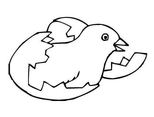 【小鸡破壳简笔画图片】破壳的小鸡简笔画画法大全