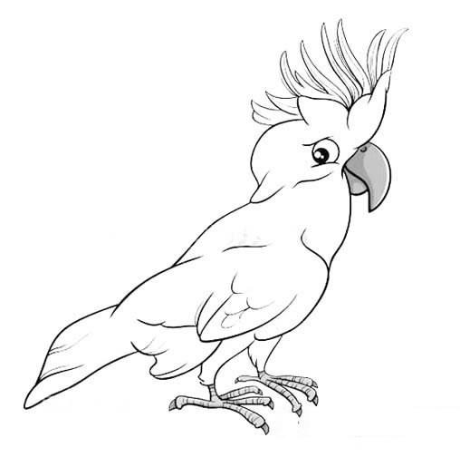 鹦鹉简笔画图片 鹦鹉polly的画法简笔画图片