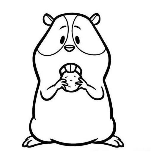 卡通豚鼠简笔画图片大全_豚鼠简笔画