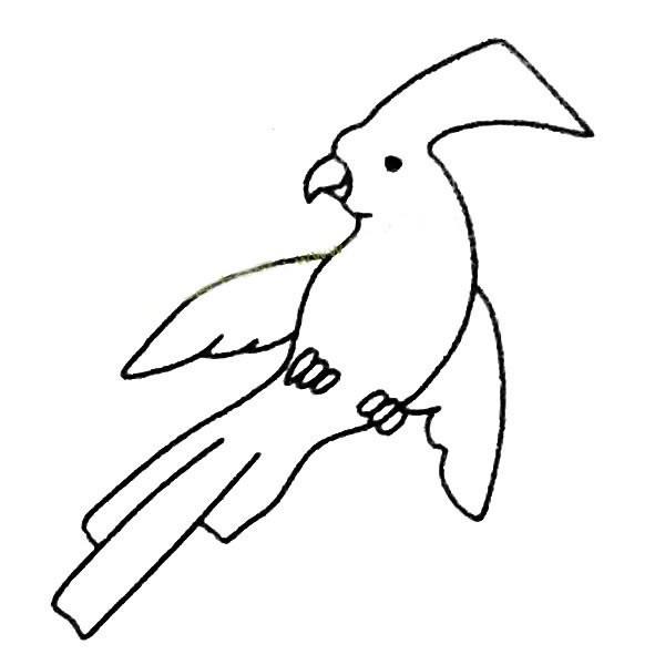 鹦鹉如何画简笔画步骤图片教程_7种鹦鹉简笔画图片大全