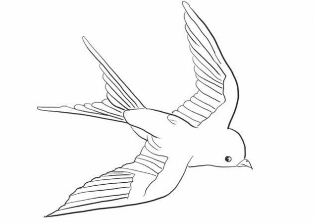 小燕子简笔画步骤图解 - 展翅飞翔的燕子简笔画如何画