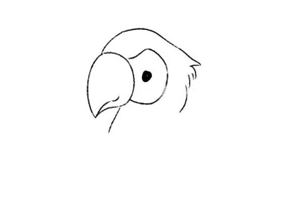 【聪明的鹦鹉简笔画】简笔画鹦鹉的画法步骤图解