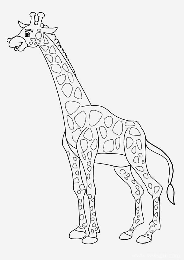 【长颈鹿简笔画】卡通长颈鹿简笔画图片大全