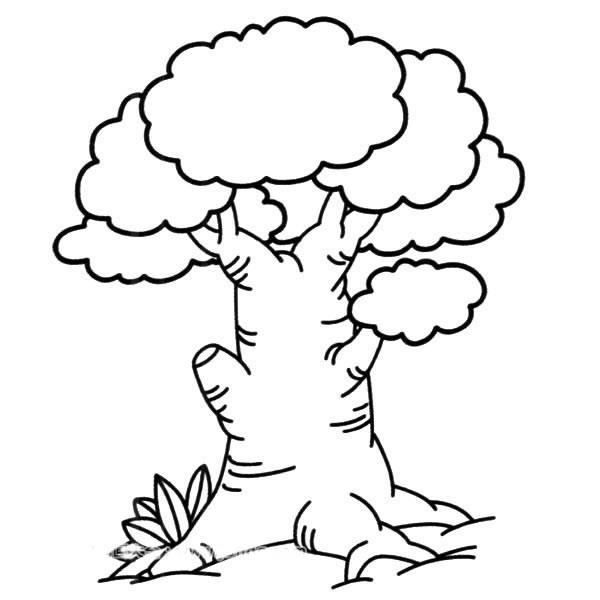 【大榕树简笔画】茂盛的大榕树简笔画简单画法
