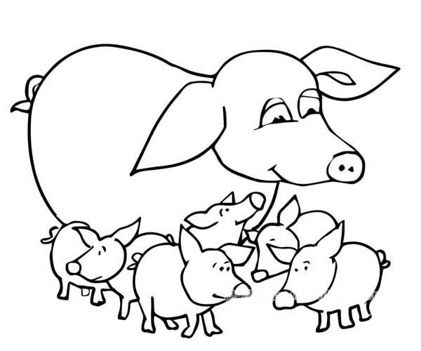 猪妈妈和一群小猪简笔画图片