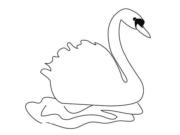 漂亮的天鹅简笔画图片