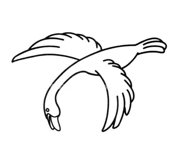 向下俯冲的大雁简笔画图片_大雁的简单画法
