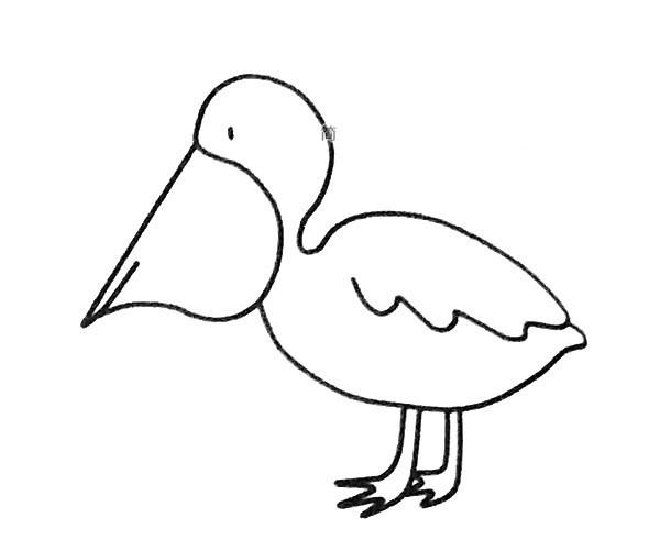6款漂亮的鹈鹕简笔画图片 鹈鹕的简单画法大全
