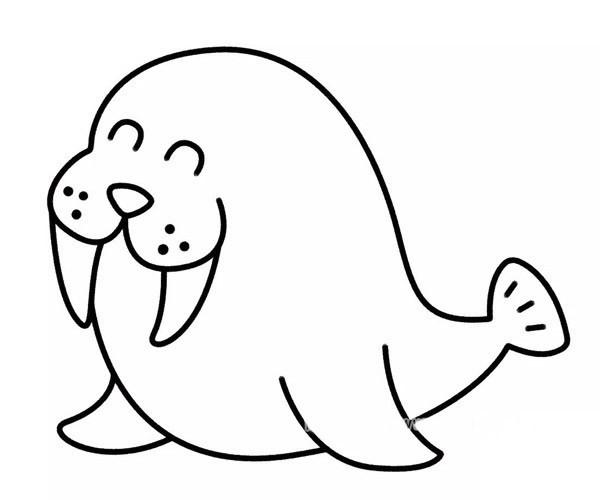 儿童学画开心的海豹简笔画步骤教程 卡通海豹的简单画法