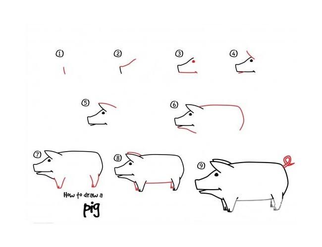 幼儿学画猪的简笔画步骤图解教程 猪的画法