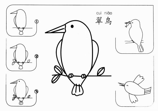 儿童学画翠鸟简笔画步骤图解教程 翠鸟如何画