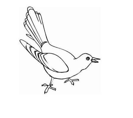 3款布谷鸟简笔画图片大全 布谷鸟如何画