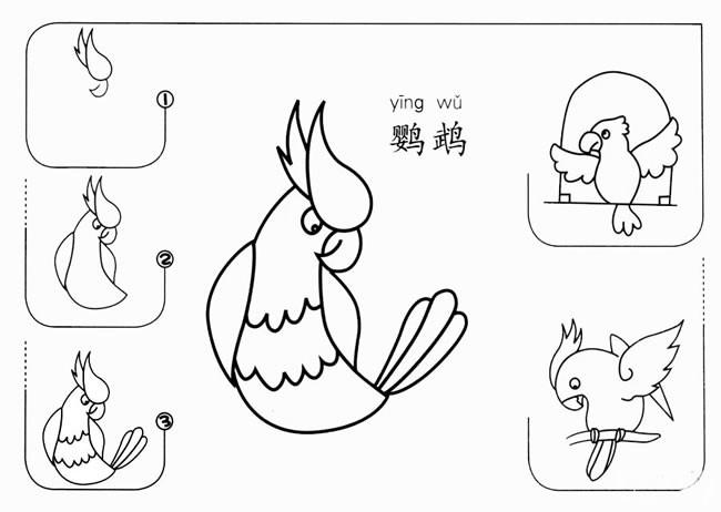 幼儿学画鹦鹉简笔画步骤图解 鹦鹉如何画