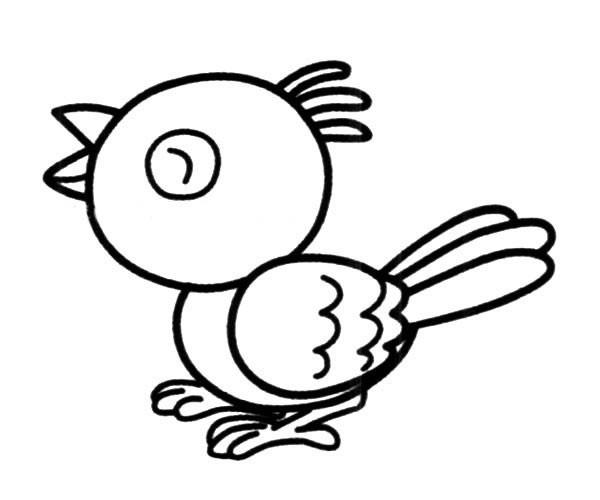可爱的卡通小鸟简笔画图片