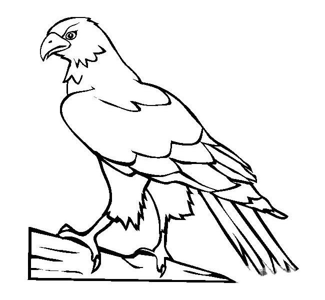简单的老鹰简笔画画法