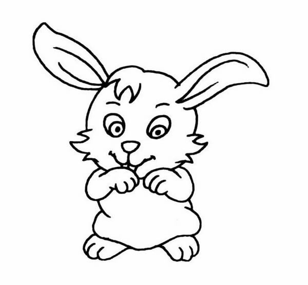 可爱的小白兔简笔画图片及步骤图解教程