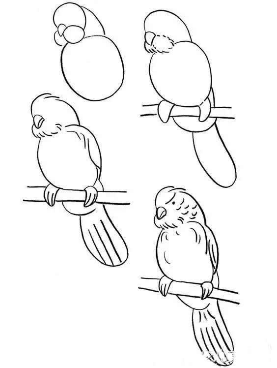 各种鸟儿的简笔画步骤图片教程